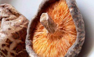 Шиитаке гриб полезные свойства и противопоказания