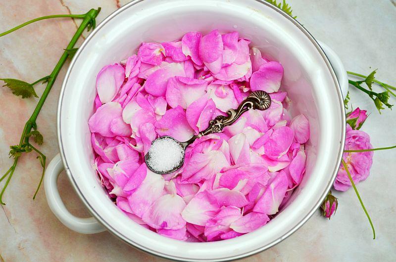 Нужно вымыть листья чайной розы